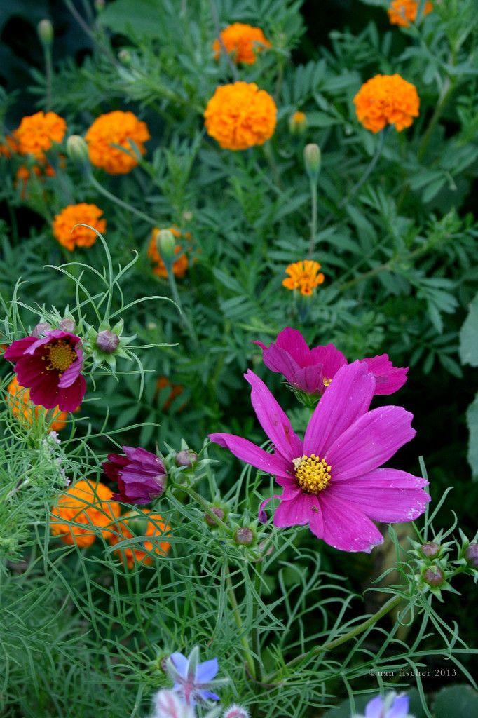 39 Best Images About Garden Ideas On Pinterest Gardens 400 x 300
