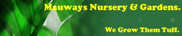 Perennials : Mauways Nursery, Online Mail Order Plants