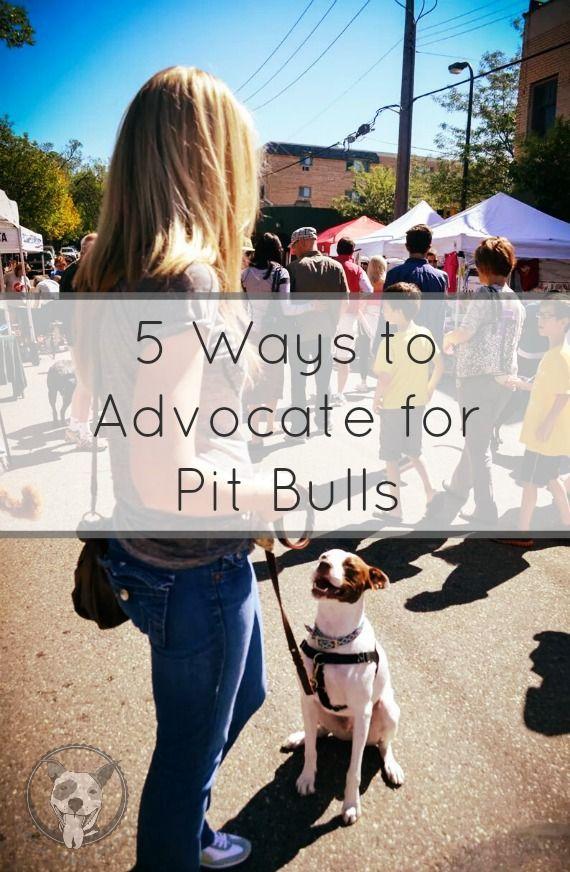 Five Ways to Advocate for Pit Bulls - lolathepitty.com #pitbullawarenessmonth