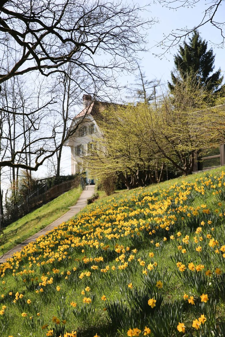 Reiseblog: Städtereise Stadt Bern, Schweiz, Sehenswürdigkeiten, Aktivitäten, Egelmösli, Kirschblüten, Rosengarten, Gärten, Aussicht, Wandern. Reisebericht.