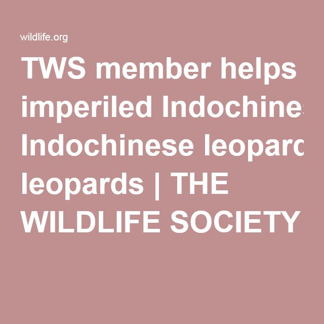 TWS member helps imperiled Indochinese leopards | THE WILDLIFE SOCIETY