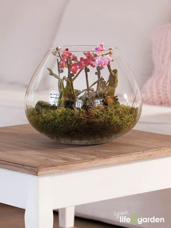 Terrarium met roze orchideeën