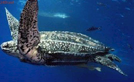 Plano de ação nacional protegerá tartarugas marinhas por cinco anos