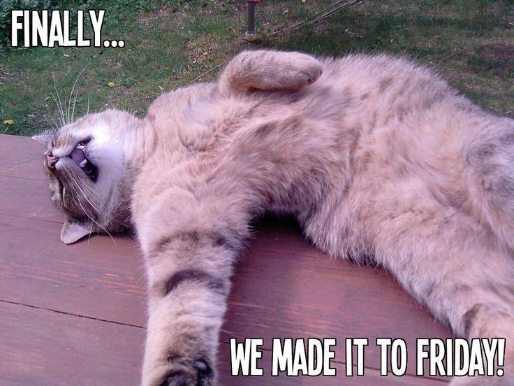 Funny Unique Memes Memes Vault Tgif Cat Memes