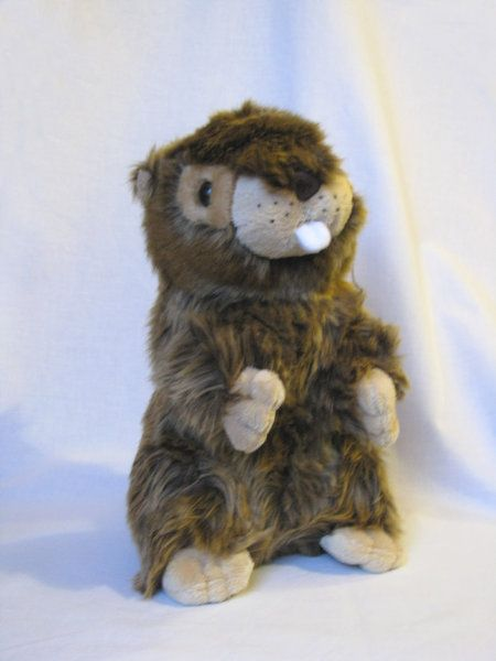 """Music Box plush Marmot.       Size about 25cm.     After the pull on the cord can hear the melody  """"Edelweiss"""".     High quality and soft cuddly  made from the finest soft plush,  cuddly soft plush,    Made in Germany. http://www.sammler-und-hobbyshop.eu/Music-Box-plush-Marmot"""