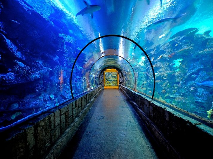 mandalay bay aquarium | Las Vegas Attractions |