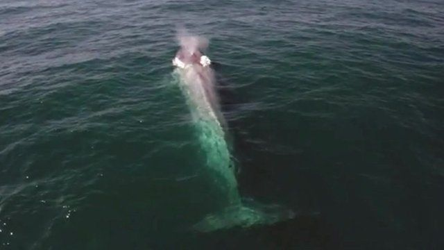 Blue whale's perfect timing to photo bomb TV presenter - CBBC ...
