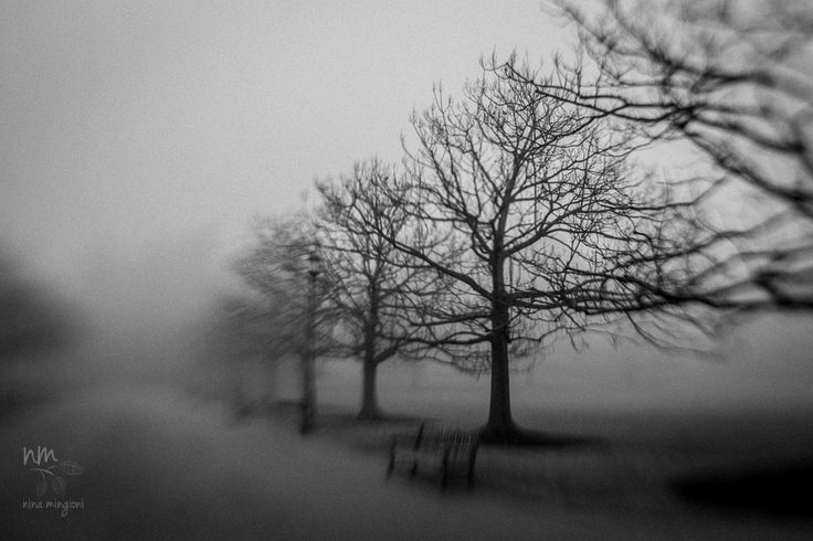 places » Nina Mingioni Photography  #lensbaby #seeinanewway