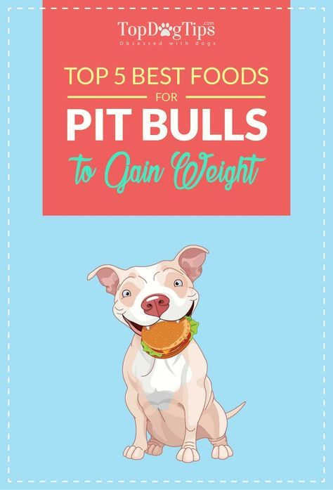 Top 5 Best Dog Food For Pitbulls To Gain Weight And Lean Muscle