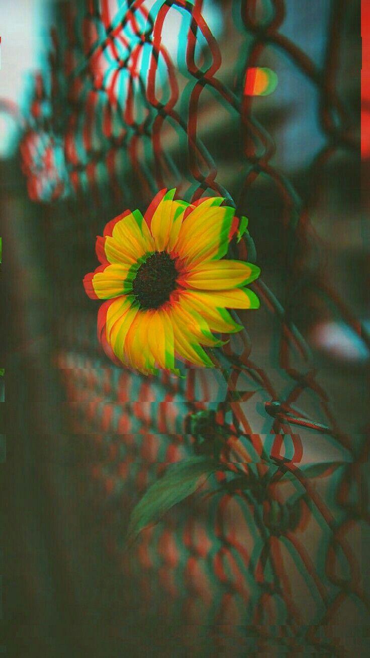 Shine🌟 Sunflower Wallpaper Glitch Trippy Wallpaper