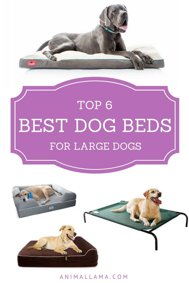 Extra Large Orthopedic Dog Beds Best Price - Top 6 best dog beds for large dogs orthopedic comfy beds