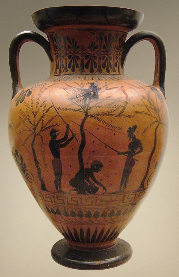 Greek Neck amphora,	Scene of olive-gathering by young people. Attic black-figured neck-amphora, ca. 520 BC