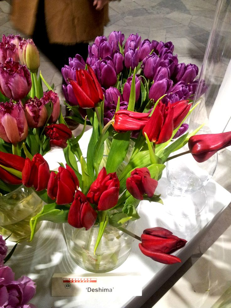 Deshima tulips
