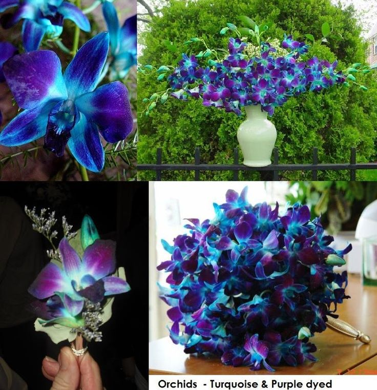 Lavender And Turquoise Wedding | Turquoise And Purple Orchids   You Can  Order These Specialty Dyed
