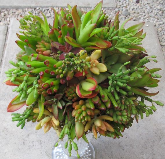 succulent wedding bouquet that lasts and lasts