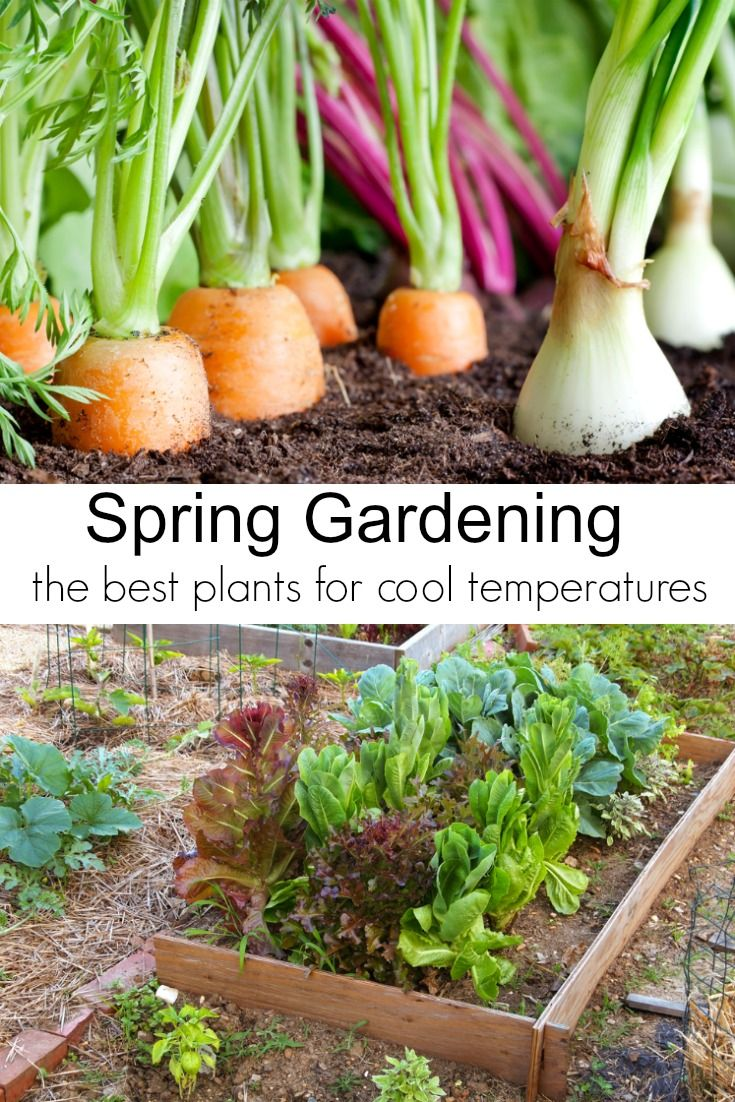 Early Spring Garden Vegetables To Plant Now Spring Vegetable Garden Summer Vegetables Garden Spring Gardening Vegetables