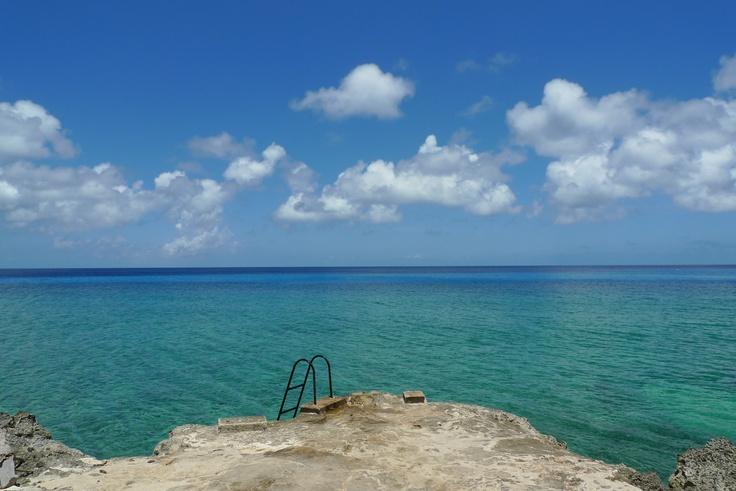 Coral Beach Wildlife