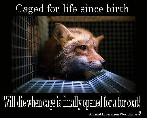This is why I will only wear faux fur. If people were meant to wear fur we would've been born with it.