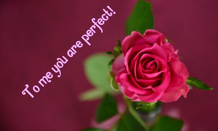 #love #rose #perfect #app Check out this amazing app and make your images even better!