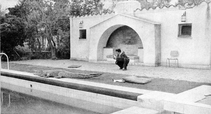 Thumb cocodrilo en casa de tomas moro de salvador allende 1971