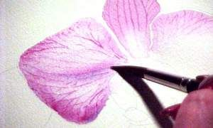 Susie Short Watercolor-Tips