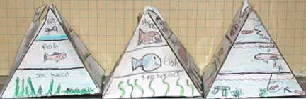 pyramid food chain idea  but challenge students to do something other than grass - rabbit - fox and the usual. let them do their own