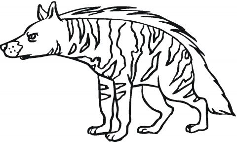 aardwolf colering pages hyenas