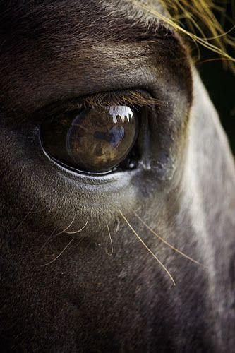 Ojo de caballo