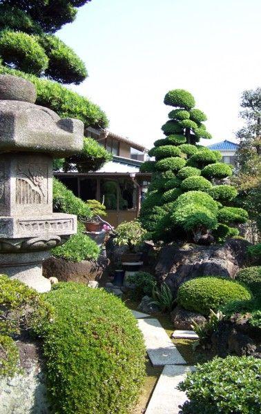 240 best images about topiary niwaki on pinterest for Zen garden trees