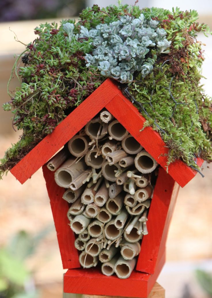 Make your own house for the ladybugs. Good beginners woodworking project. - Google Search