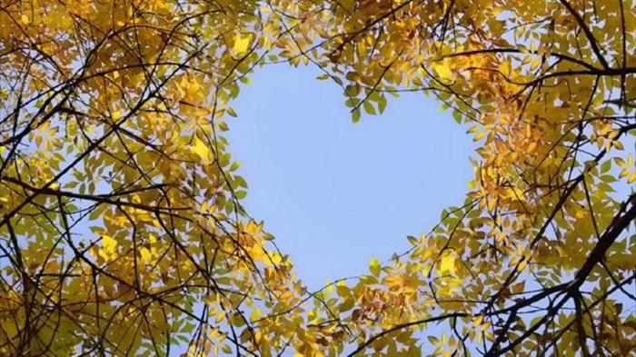 Corações da naturezahttp://www.tudoporemail.com.br/content.aspx?emailid=6275