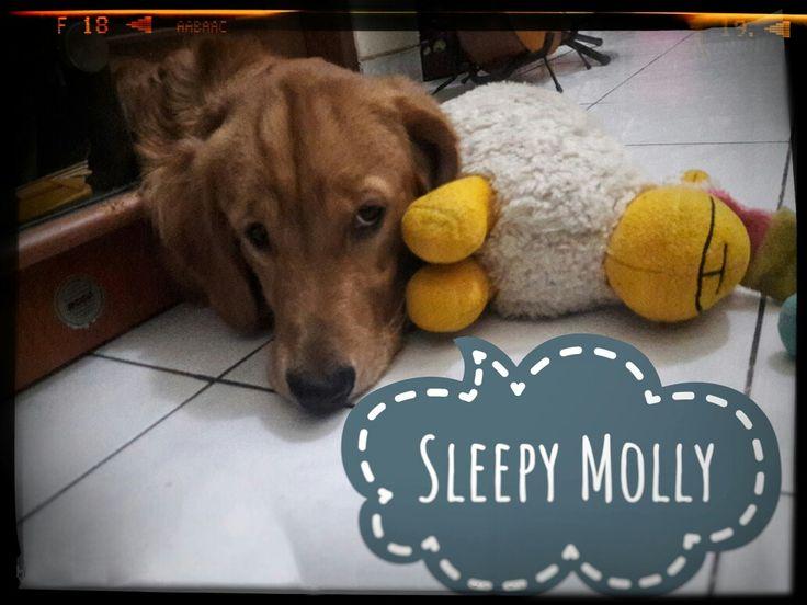 Molly, my 4 legs baby
