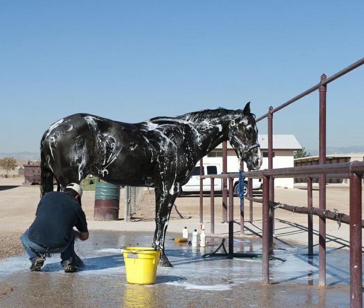 DIY horse shampoo using Aloe Vera gel, I know what I'm making tonight!