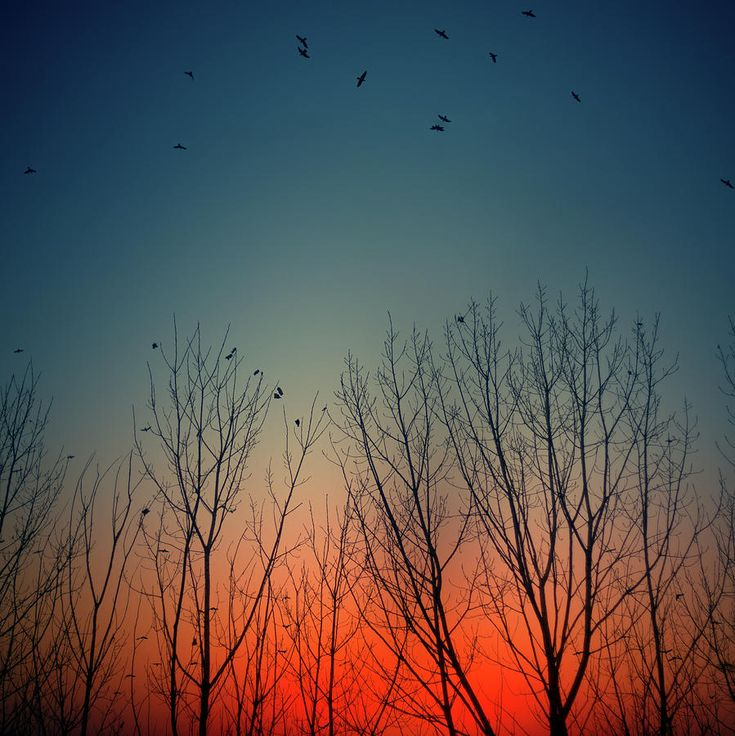 ✮ Sunset behind trees with birds flying, Spain
