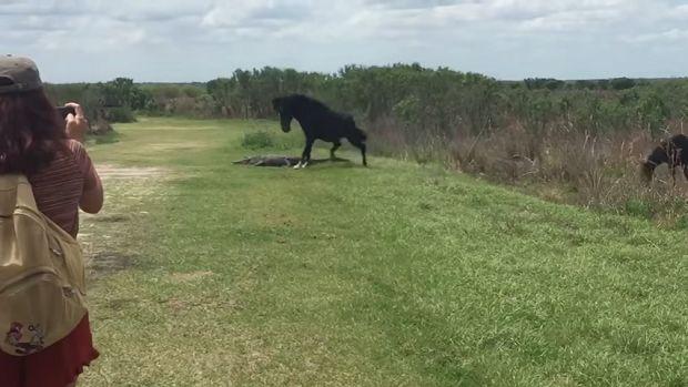 (Video) Esta es la dramática pelea entre un caballo y un cocodrilo - http://www.esnoticiaveracruz.com/video-esta-es-la-dramatica-pelea-entre-un-caballo-y-un-cocodrilo/
