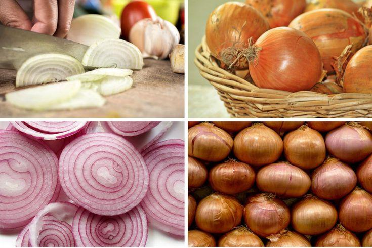 4 tipos principales de cebollas. Estas son sus diferencias y sus más importantes aplicaciones en cocina