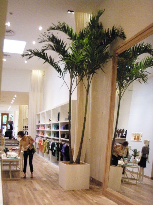 Best 25 Indoor Palm Trees Ideas On Pinterest Tree Island
