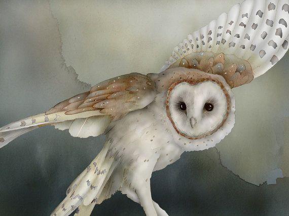 Barn Owl 25 signed fine art print 9x12 Bird lover by WildDreams