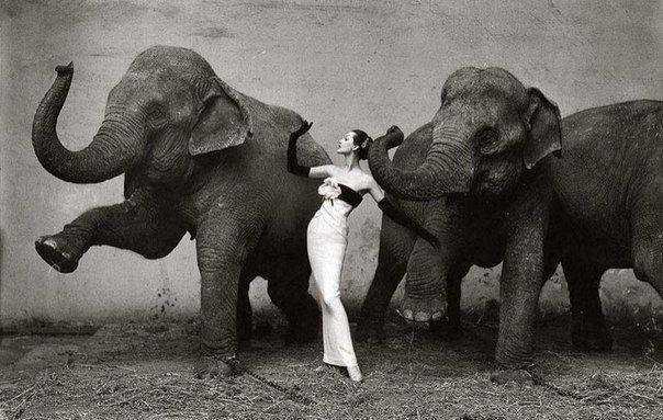 Снимок знаменитого американского фотографа Ричарда Аведона «Довима со слонами, вечернее платье от Dior», сделанный в 1955 году в Париже.