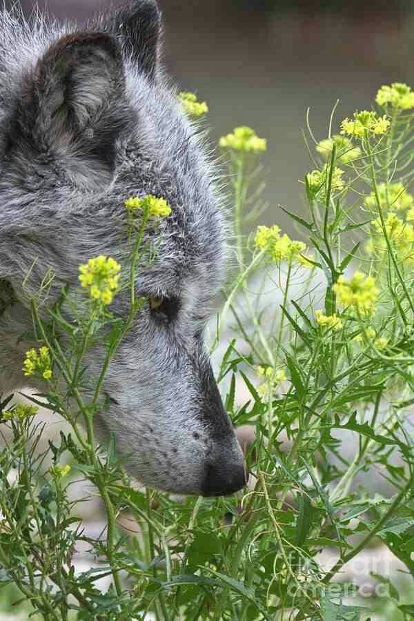 sniff and smell the wildflowers Jess