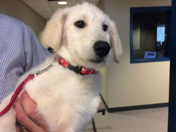 If you're interested in adopting her, call the Erie County SPCA at 875-7360.