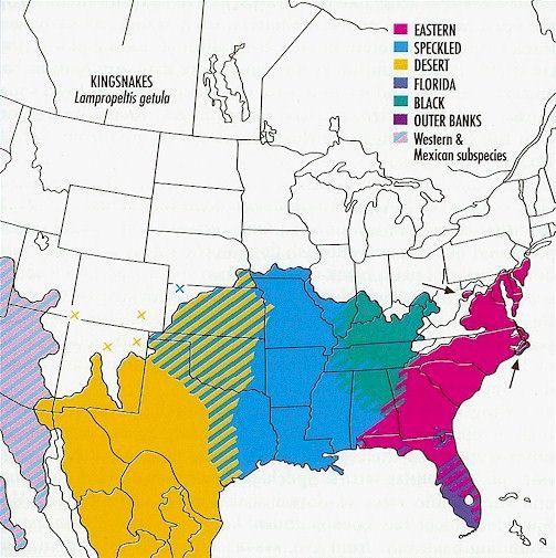 Eastern Kingsnake Map 45 best images about A...