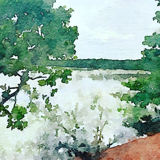Darwin #wetlands #watercolour #green