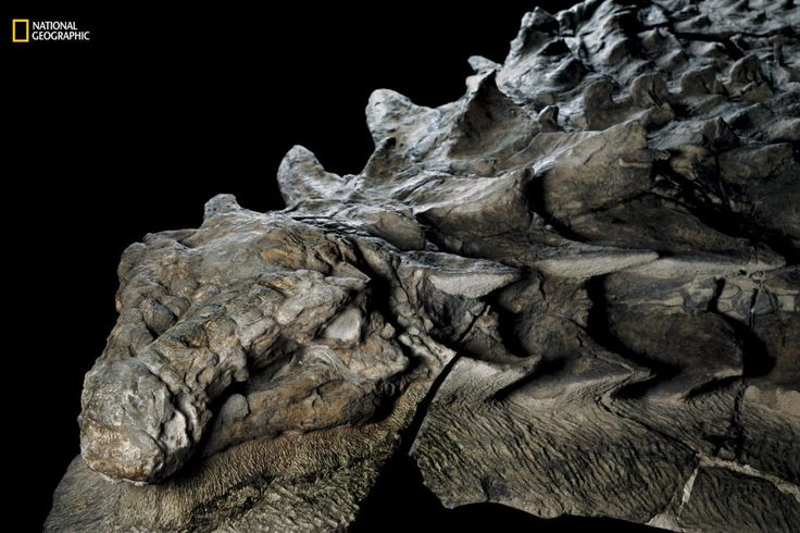 'Rare as winning the lottery': New dinosaur fossil so well-preserved it looks like a statue