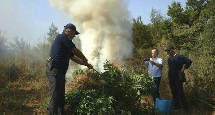 Watch Now! Fighting the cannabis mafia – Albania's drug cartels | DW Documentary
