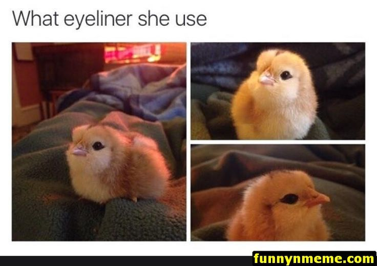 +61 funny memes – #funnymemes #funnypictures #humor #funnytexts #funnyquotes #funnyanimals #funny #lol #haha #memes #entertainment #funnynmeme.com