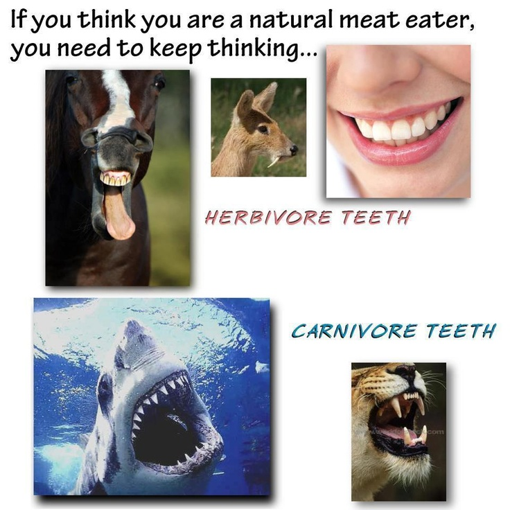Pin by Ting on Compassion Carnivore teeth