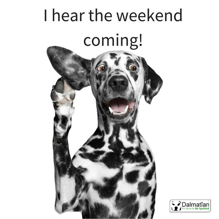 I hear the weekend coming. Dalmatian dog. Weekend. Friday