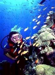 Scuba Dive Great Barrier Reef