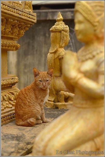 Le Chat Photographe » Portraits de chats d'asie